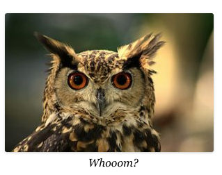 "an owl saying ""whom"""